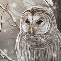 Barred Owl by Deertush