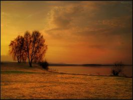 Sunset and the Tree by Flaure