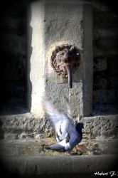 Fontain for doves by Hubert11