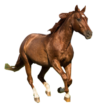 Quarter Horse Stock 6   Rabicano By Skunktail17-d5 by HBMB101