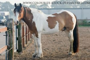 Tobiano 2 by Colourize-Stock