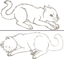 Kitties Before and After by Who-Took-My-Pie