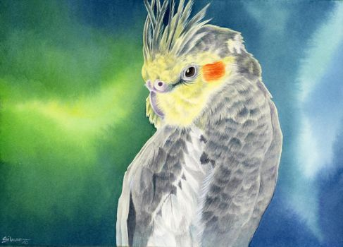 Cockatiel by LucieOn