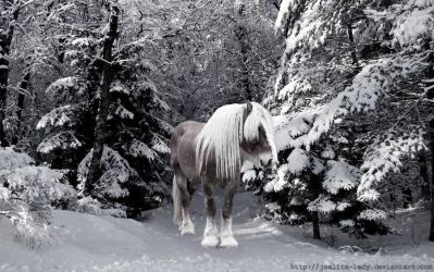 Horse in the snow WP by Joalita-lady