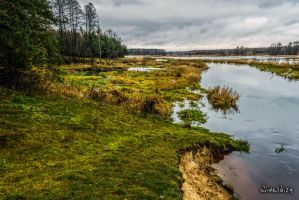 Narew River in Podlasie - photo 1 by wiwaldi24
