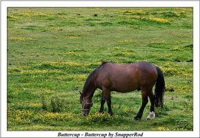 Buttercup - Buttercup by SnapperRod