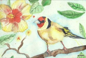goldfinch by kavouranny