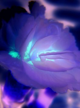 Neon Flower by Synthemum