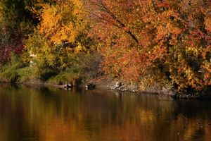 Autumn River by FoxStox