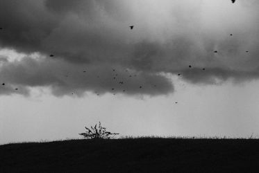 Fear of the Storm by altieresrohr