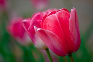 colours of spring by deoroller