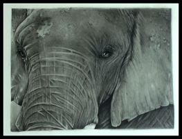 Close Encounter Elephant by IngeLammers