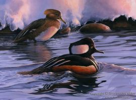 Amaranthine- Hooded Mergansers by Nambroth