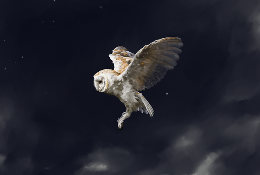 Barn Owl by nekomancer123