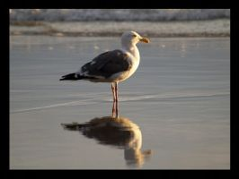 seagull seagull by mohaganbev