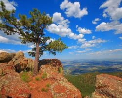 Lone Pine Mountaintop by greenunderground