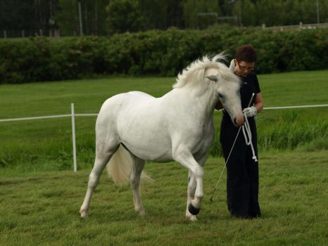 removed tack welsh mountain pony by suuslovertje