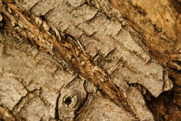 Stock: Wood Texture 2 by Pawkeet
