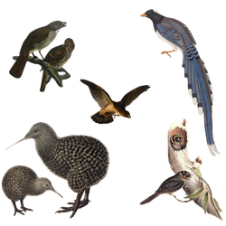 Variety of Birds 2 PNG by chaseandlinda