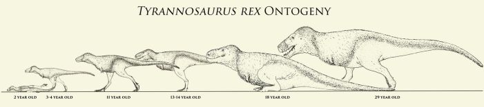 T. rex Ontogeny by Yutyrannus