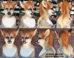 Summer Red Fox Head by Magpieb0nes