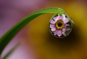 Delicate by Alliec