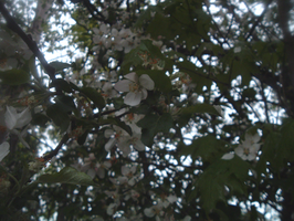 Flowers on a Tree by acktacky