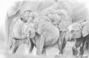 Elephants by CeciliaSal