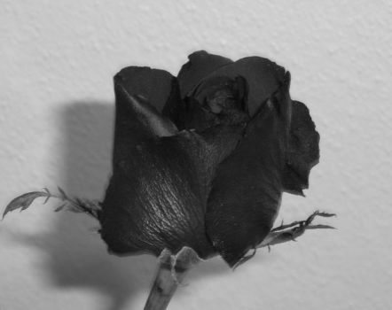 black rose by ksiyah