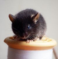 Baby mice 3 by RosieHPhotographer