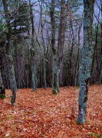 Papuk forest by photonFUEL