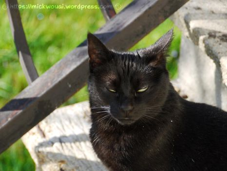 My Black Cat does not like pictures by mickwouai