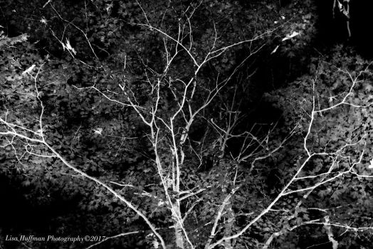 Inverted tree by lisahuffman2001
