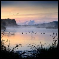 Birds in mist by Basement127