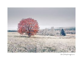 Fields of Frost by Stridsberg