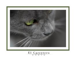 Chat gris...II by elcarretero