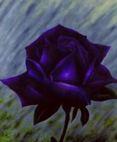 Purple Rose by Artman225