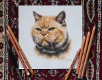 Kitty, pastel 18x18cm by 26lisamarie