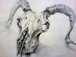 Sheep Skull Drawing by Louisa911