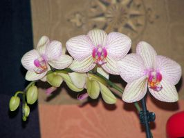 orchids by VaybsStocks