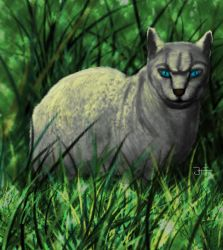Cara cat for Snowstorm-cat by jablar