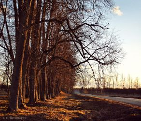 The trees 2 by orlibraorli