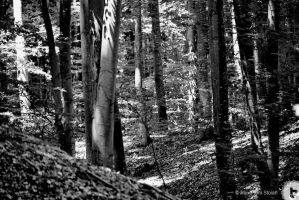 in the woods by AlexDeeJay