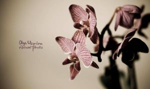 Orchid I by Ratafee