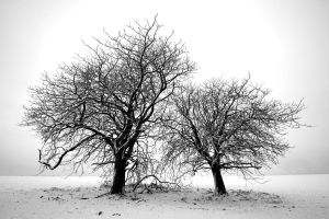 Two trees by roon1305