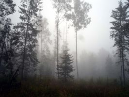 Forest 1002 by MASYON