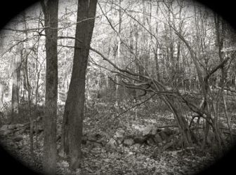 Worcester Woods 12 by scarygirl67