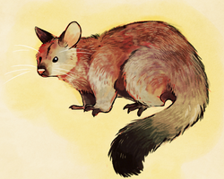 Brushtail by Limecrumble
