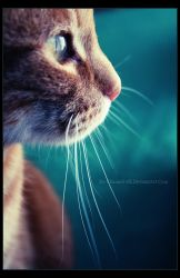 J'aime le Turquoise by Xx-Channel-xX