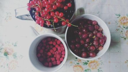 Berries by Yorphine